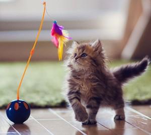 kittenplayingsmall