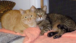 Sheldon & Bodey snuggling at the shelter
